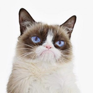 Grumpy Cat is one of the internet's most famous cats.